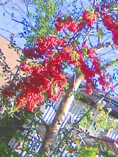 Kurokawa_001