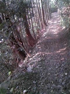 Trail_008