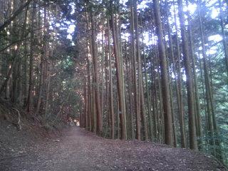 Trail_009